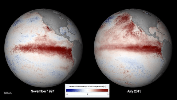 A comparison of the November 1997 and July 2015 El Niños in the Pacific Ocean west of Peru. (Areas of warm water appear in red.) The 2015-2016 El Niño has exacerbated ocean warming. (Image: NOAA Environmental Visualization Laboratory)