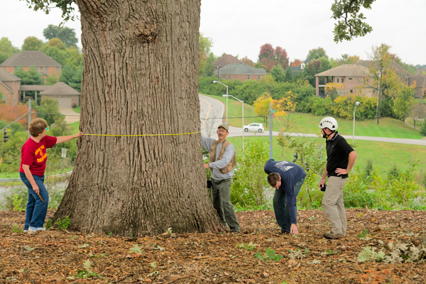 Evaluating trees is an important part of Kimmerer's conservation work. (Photo: Dr. Kimmerer)