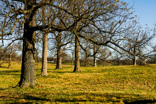 This woodland pasture has barely changed in over 300 years. (Photo Credit: Dr. Kimmerer)