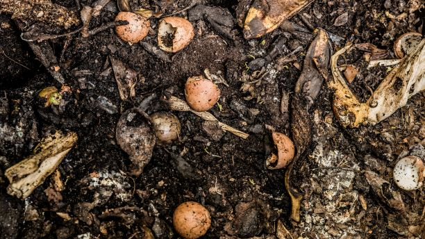 Food scraps in a compost heap. (Photo Credit: Philip Cohen / Flickr)