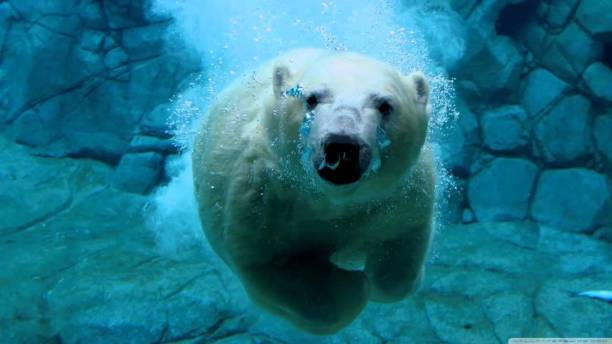 Polar bear underwater. (Photo via YouTube screenshot)