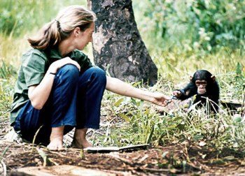 Dr. Jane Goodall with chimp. (Photo via JGI)