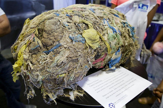 Plastic garbage from the stomach of a camel. (Photo Credit: Rick Baraff)