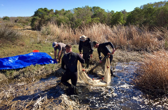 Biologists seining a small pool for Southern Tidewater Gobies at Cockleburr Canyon Creek, Marine Corps Base Camp Pendleton, San Diego County. (Photo Credit: Akino Higa)