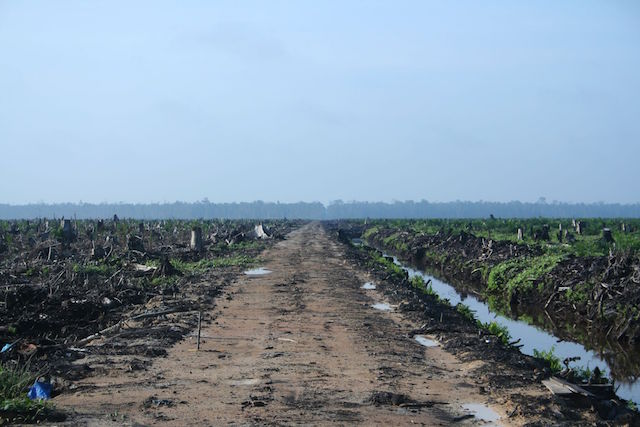 Deforestation up close. This land was cleared for an oil palm plantation in Riau, Sumatra. (Photo Credit: H Dragon / Flickr)