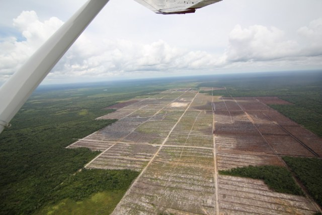 Deforestation on peatland for a palm oil plantation in Central Kalimantan, Borneo, Indonesia. (Photo Credit: Glenn Hurowtiz / Flickr)