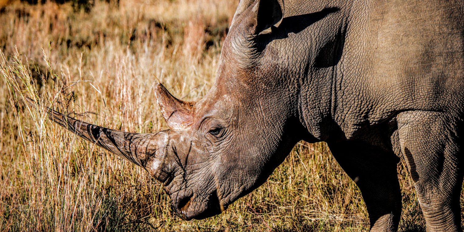 facts_about_rhinos_2x1