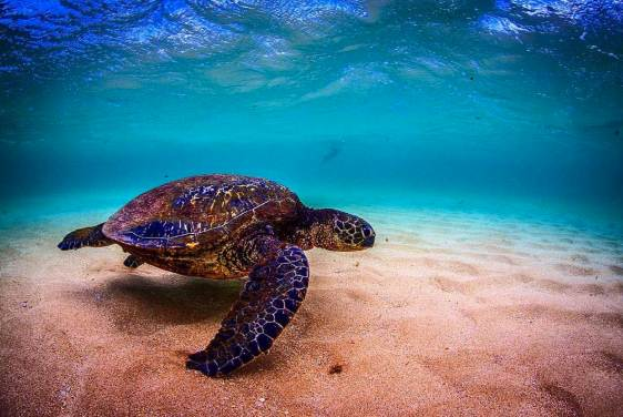 Sea turtle photographed on #WorldSeaTurtleDay. Photo credit: Jeremy Mckane.