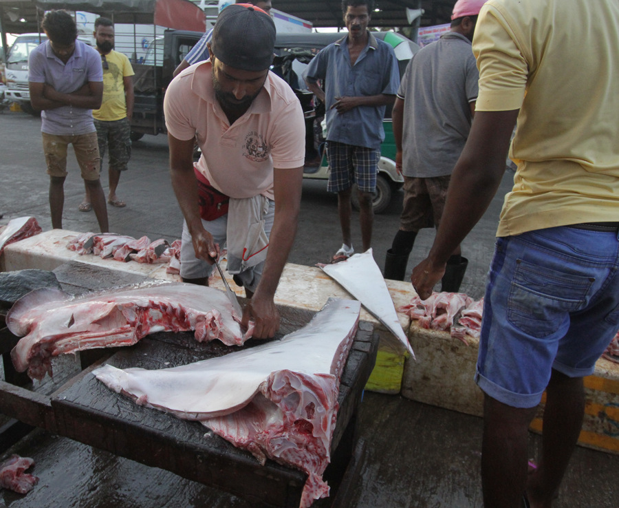 chopping up mantas at Negombo fish market, Sri Lanka. The meat is considered low-grade. The main prize is the gill-rakers.