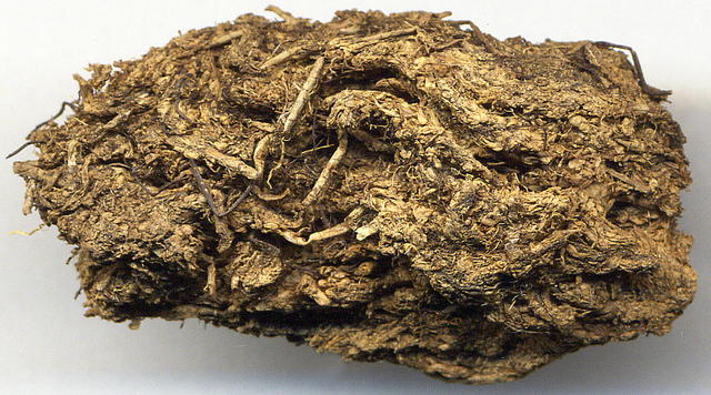Peat is a soil-like material consisting of decomposed plants and other organic matter. It's commonly found in moist, acidic environments, like bogs. (Photo: