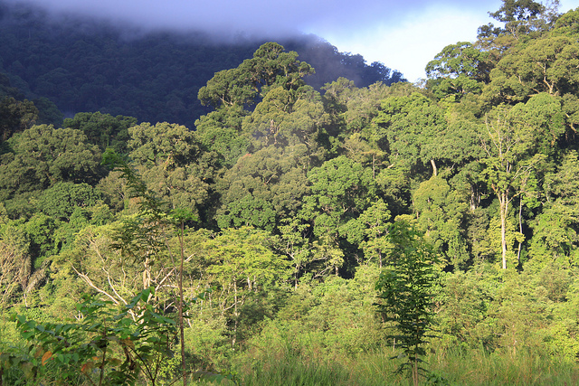 The Leuser Ecosystem. (Photo: gbohne / Flickr)