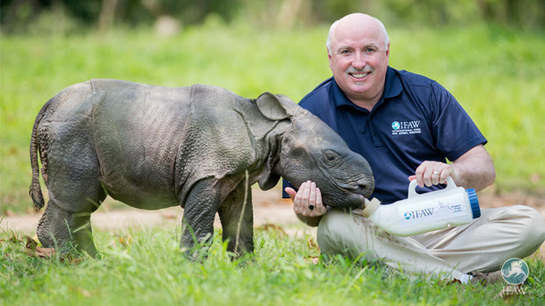 Azzedine Downes, President and CEO of the International Fund for Animal Welfare, feeds a rhino at the Wildlife Rescue Centre in Kaziranga, India.