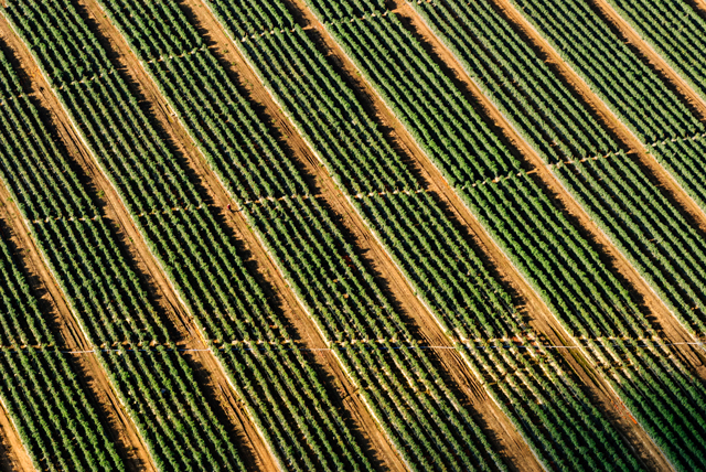 More than 6 million gallons of chlorpyrifos are used on crops in the U.S. every year. (Photo: Matt Benson / Unsplash)