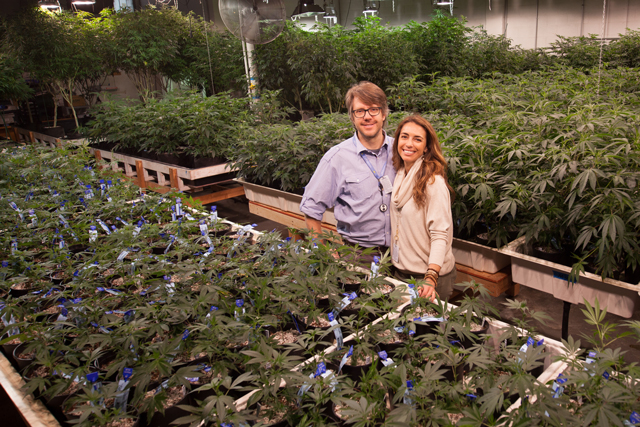Q&A: Amy Andrle on Growing Greener Weed - Planet Experts