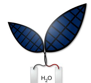 The Bionic Leaf 2.0: An artificial photosynthesis system. (Photo Credit: Jessica Polka)