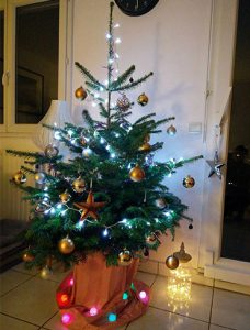 This tree is named Léon. Its current home is at Louise's in Paris. (Photo: Laure Hänggi / Reporter)