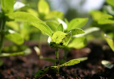 The Benefits Of Organic Fertilizers