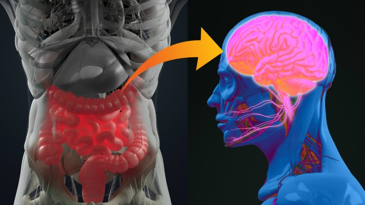 Could your gut health be contributing to your anxiety? Photo credit - Getty Images