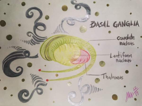 The Basal Ganglia is the main part of the brain implicated in Tourette syndrome. Author's own artwork.