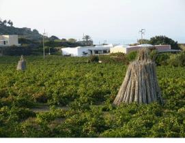 Pantelleria le vigne di Donna Fugata – Sicilia