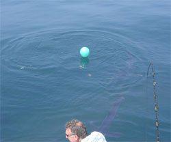 balloon float