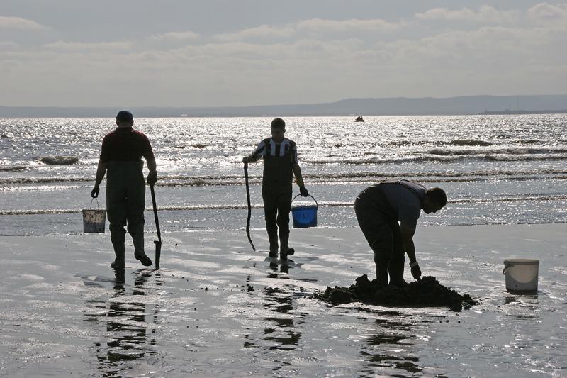 three diggers hunting razorfish