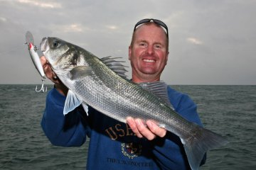 Mark with a lure caught Alderney bass