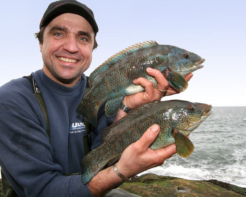 George Smith with two Filey Brigg ballan wrasse