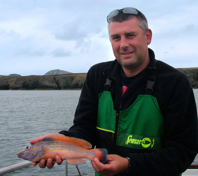 Jon Law with a male cuckoo wrasse
