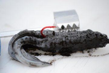 Black Squid Bait