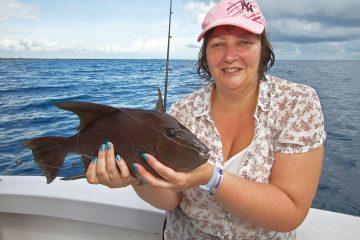 mexico fishing trigger fish