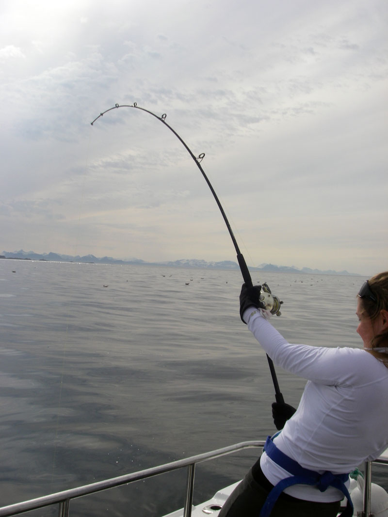 anice bend in a lady's rod as a cod fights back