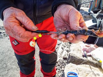 shore fishing Iceland cocktail bait