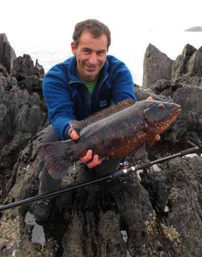 a dark coloured Beara ballan wrasse