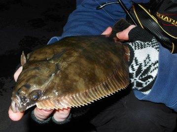 LRF Winter Flounder fish