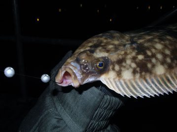 LRF Winter Flounder mouth