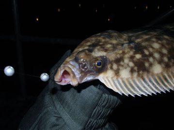 LRF Winter Flounder mouth