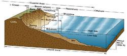 littoral zone