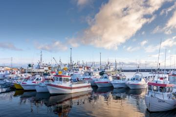 Olafsvik harbour and fleet