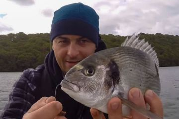 A gilthead bream
