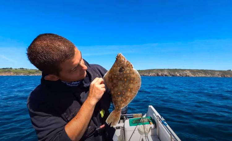 Cornish plaice