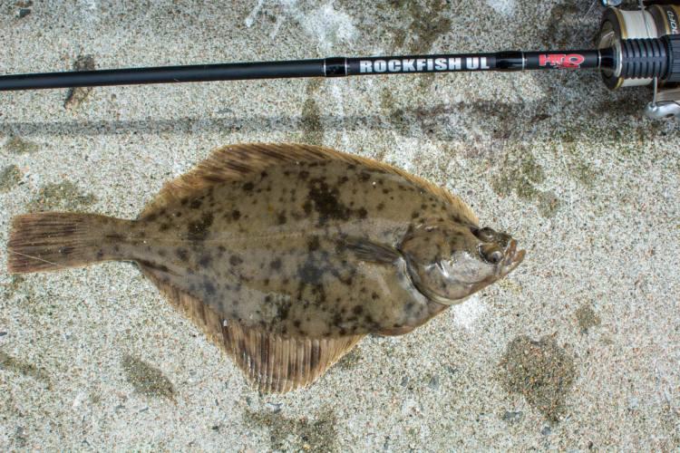 light tackle flounder
