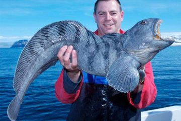 species ID catfish wolf fish
