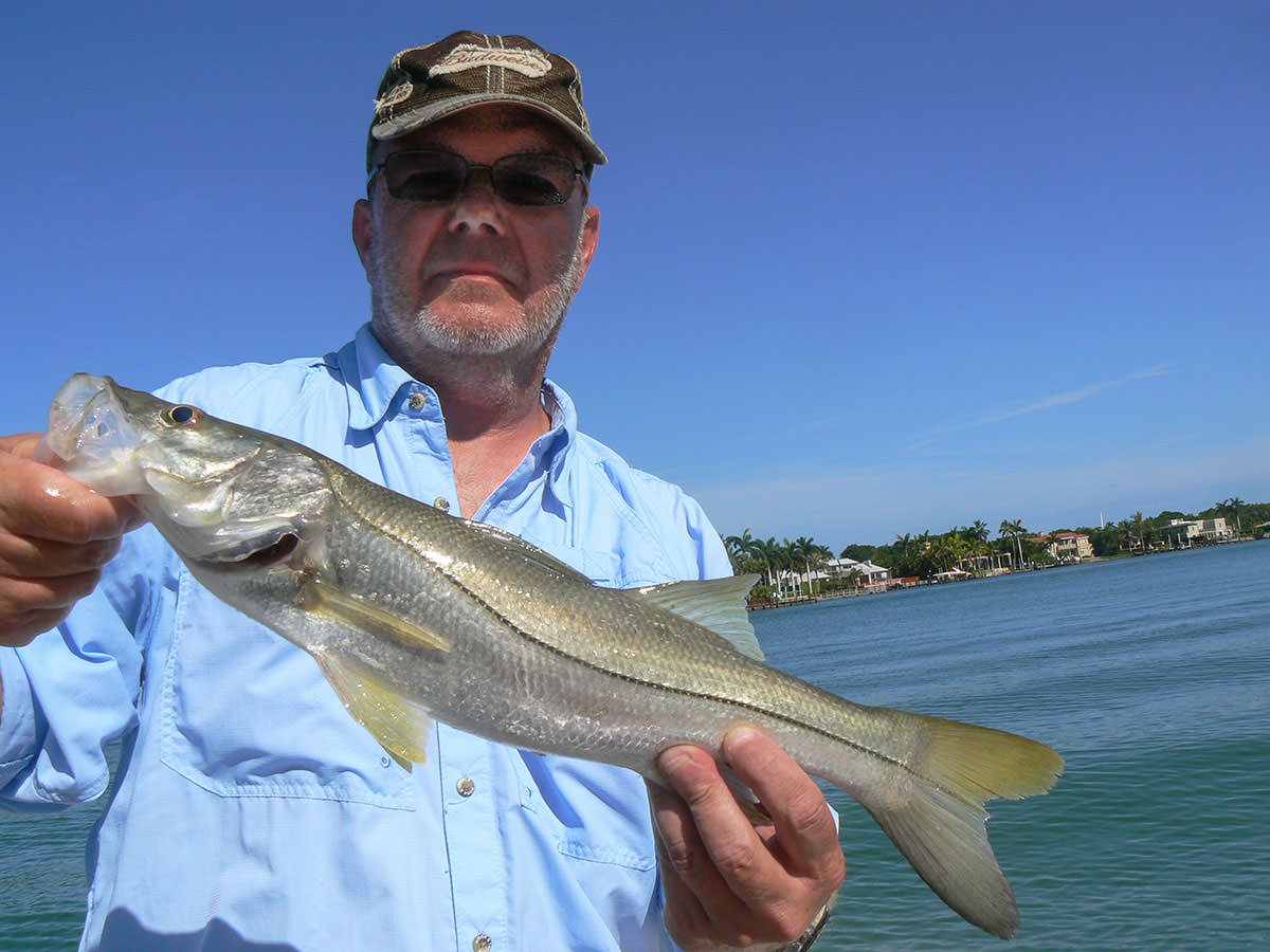 Snook in the gulf of mexico planet sea fishing for Snook fishing florida