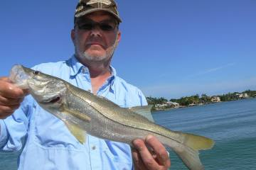 snook fishing naples florida