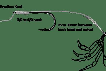 hair rigged crab
