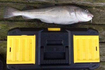 Douglas Kane's pier cod