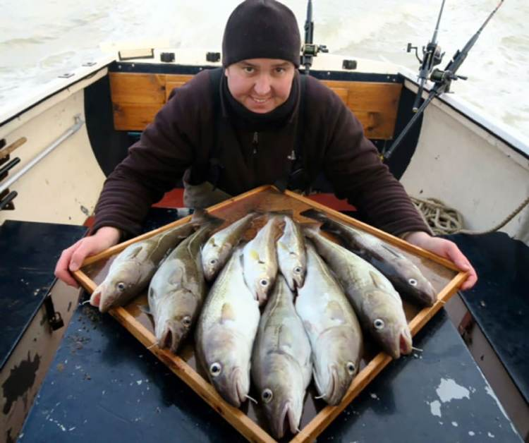 Holland on Sea codling