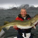 a big Lofoten Islands cod