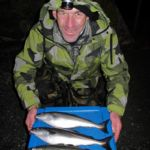 An Irish Angler's Year coalfish
